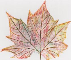 Il giornale della rete artiamo for Rete con foglie finte